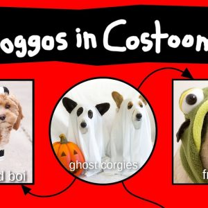 Doggos in Costooms