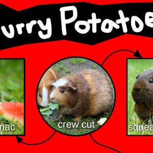 Furry Potatoes