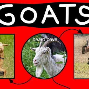 Goats Explained