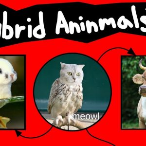 Internet Names for Hybrid Animals (Pt. 2)