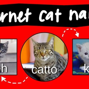 Kitteh, Kitter, and Catto - internet names for cats