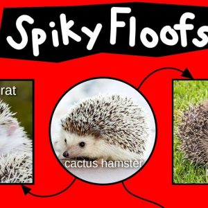 Spiky Floofs, Cactus Hamsters & Heb Hobs—Internet Names for Hedgehogs