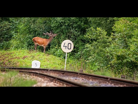 All aboard a railway for people and wildlife